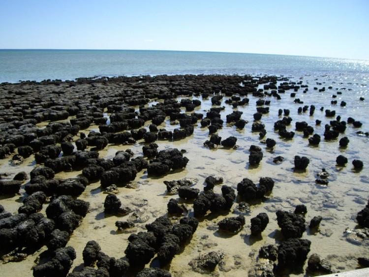 Stromatolites_in_Shark_Bay